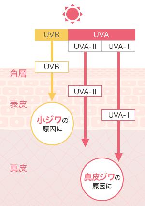 UVBは、小ジワの原因に。UVAは真皮ジワの原因に。